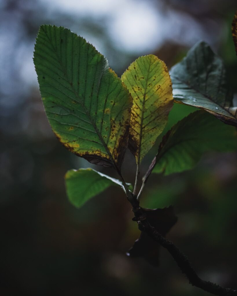 canon-550d-example-photo-leaves