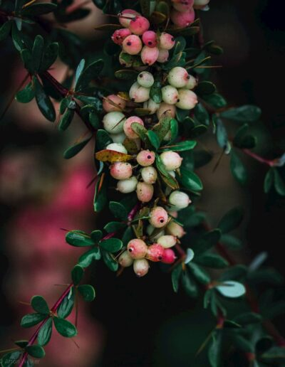 Pink, yellow and white summer berries against green background 4