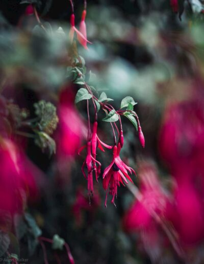 Pink flowers with blurry focus, end of summer mood