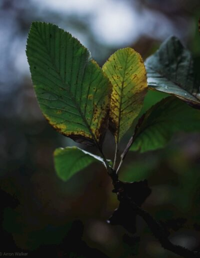 Tree leaves against blurry background with shallow depth of field