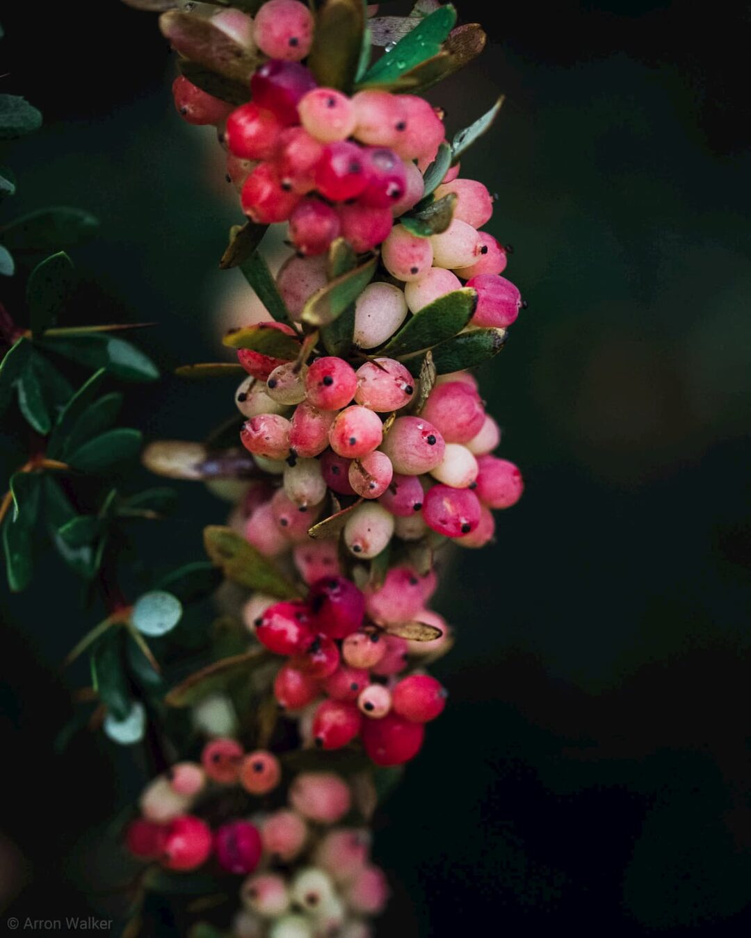 Pink, yellow and white summer berries against green background 3