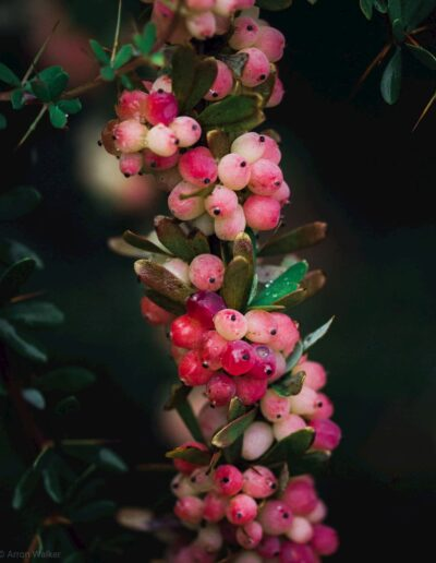 Pink, yellow and white summer berries against green background 2